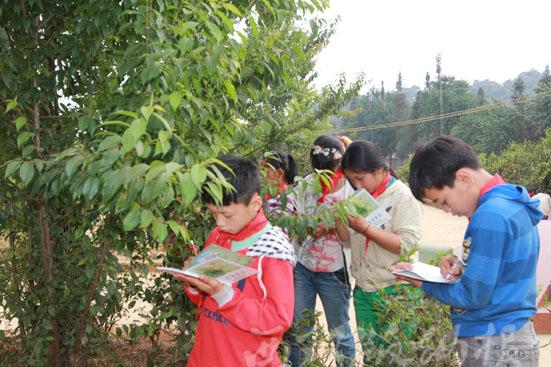 勐宋小学生在校园记录自然笔记