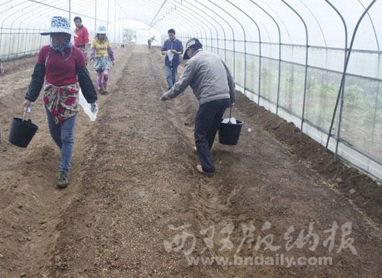 完成早稻新品种生产试验播种