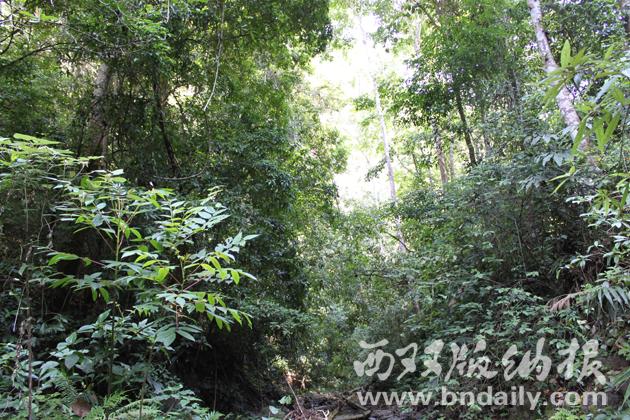 植被丰富的水源林