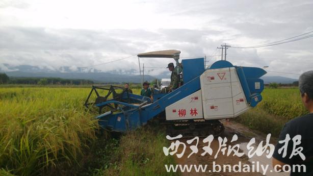 水稻精准定量栽培增产明显