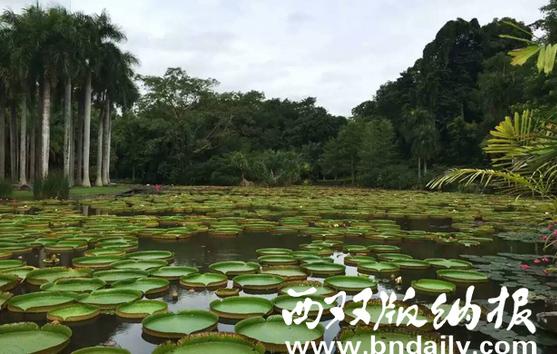 中科院西双版纳热带植物园风光