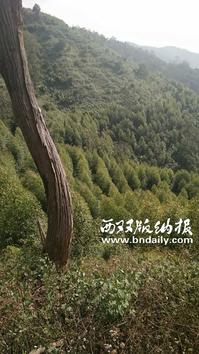 C0224006-03b-刘大江