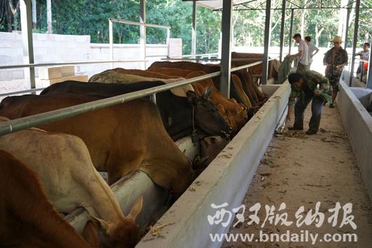 养牛专业合作社
