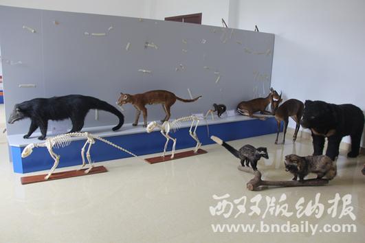 将一些动物死体制作成标本