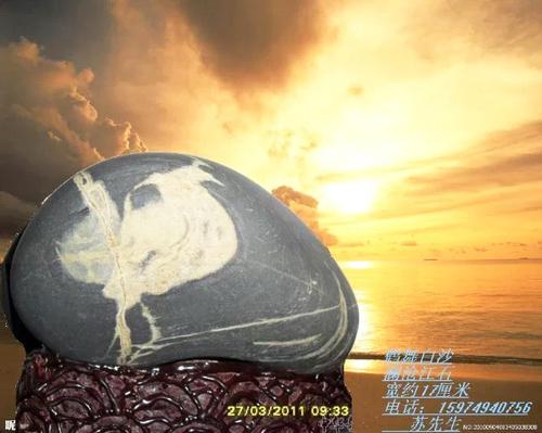 石名:鹤舞白沙收藏者:苏克洪
